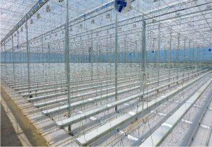 Hydroponic Lettuce Facility